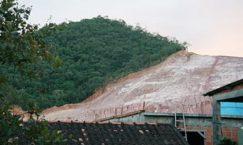rainforest destruction pic