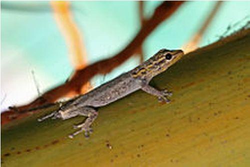 Reptiles Image