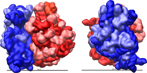 Facts about Ribosomes