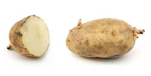 Facts about Rice and Potatoes