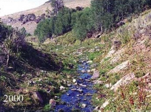 Facts about Riparian Planting
