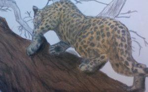 a drawing of Zanzibar Leopard