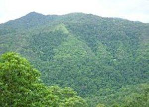 facts about rainforest