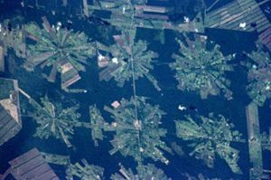 facts about rainforest destruction