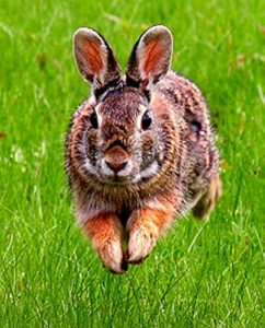 fun facts about rabbits