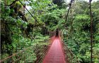 rainforest biome canopy