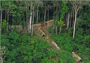 rainforest biome pic