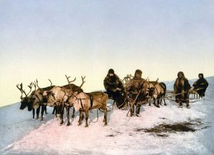 Facts about Reindeer