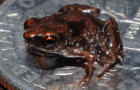 Facts about Reptiles and Amphibians