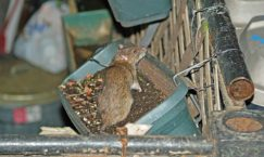 Facts about Rodents