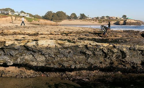 Rock Pools Facts