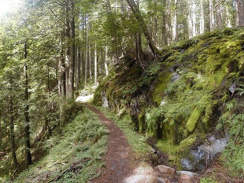 Facts about Temperate Rainforest