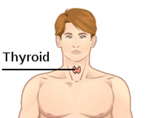 Thyroid Cancer Facts